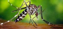 Dispositif de lutte contre la dissémination du moustique « Aedes Albopictus » dit Moustique Tigre