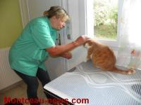Complément de la médecine vétérinaire