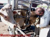 Gaec de Maumont (Agriculture) – Voir notre vidéo insolite !