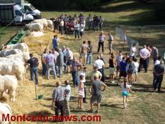 Toulon sur Arroux : Foire Agricole