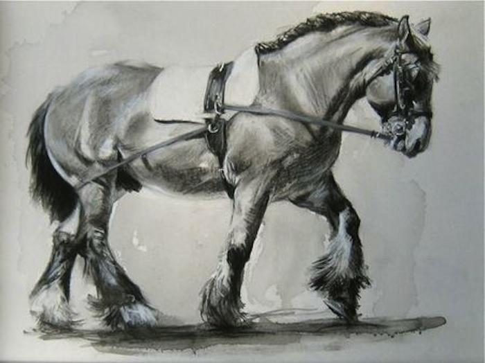 Monochromes sur le cheval au haras national de cluny - Dessin cheval de trait ...
